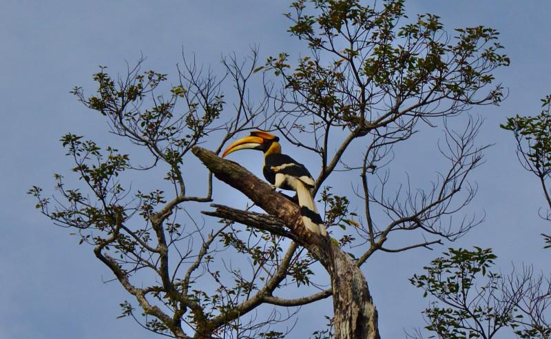 Toucan in Bokol National Park