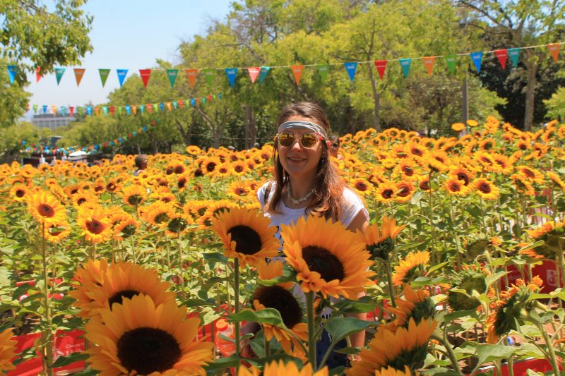 Parque Eduardo VII sunflowers