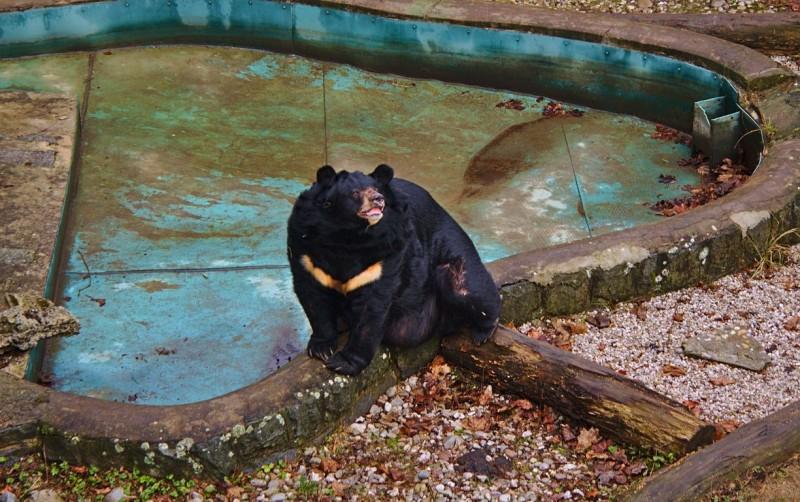 Jiří the bear at Konopiště castle