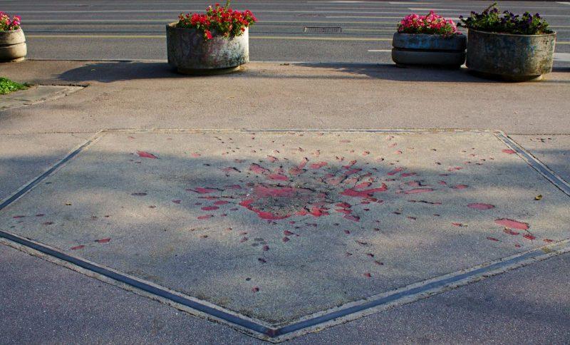 Sarajevo rose
