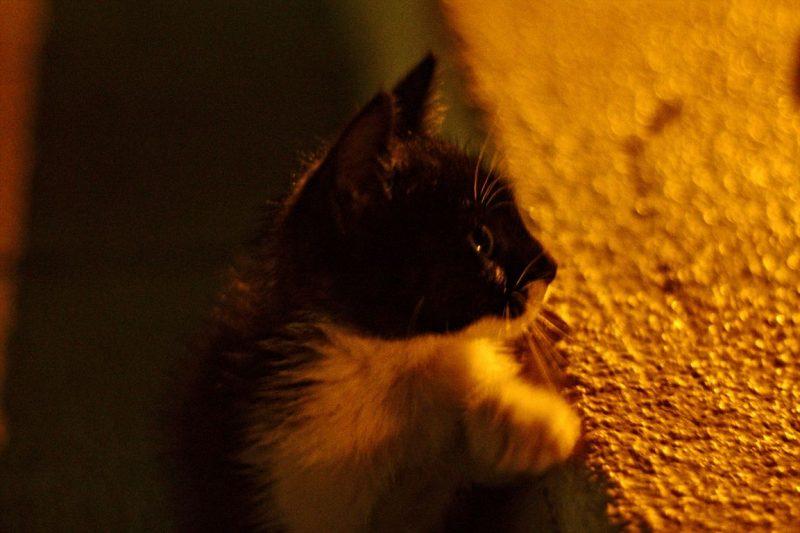 Montenegro, Kotor, cats, night