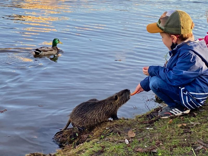 Boy feeding an otter, Střelecký island, Prague