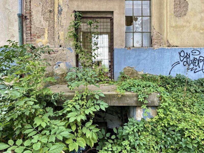 abandoned overgrown Kolbenova, Vysočany, Prague