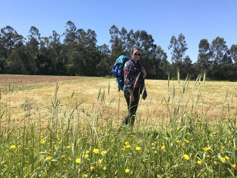 Andrea in a corn field, Camino Portugues