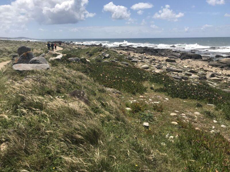 coastal landscape, Camino Portugues
