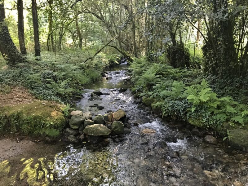 stream in forest, Camino Portugues